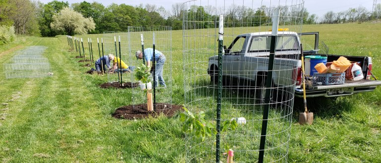 Chestnut planting Hopewell Township