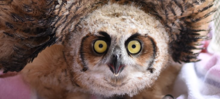 Owl Spotting In Winter New Jersey Conservation Foundation
